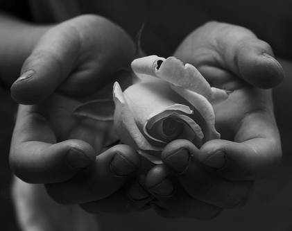 rose in palm of hands